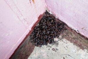 У Тернополі активізувалися невідомі черв'яки